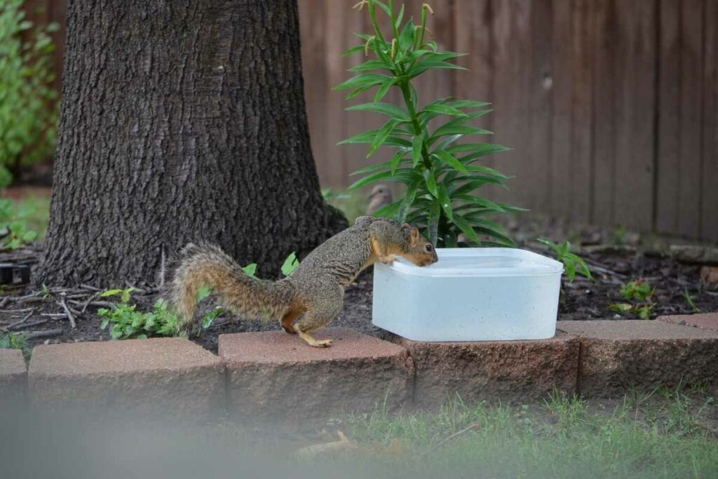 Squirrel water