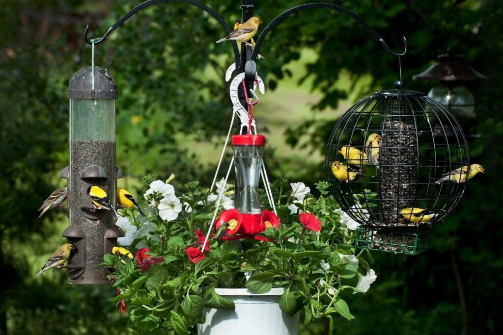 Wondering will birds live without feeder