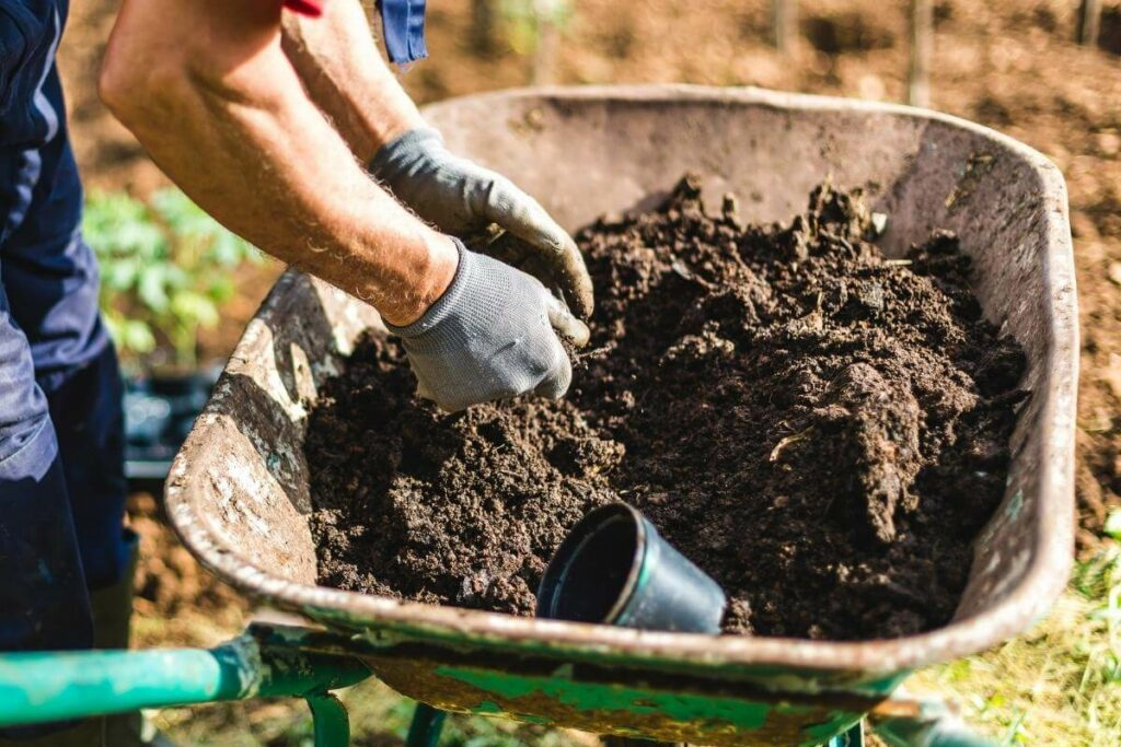 A man is spreading compost in garden