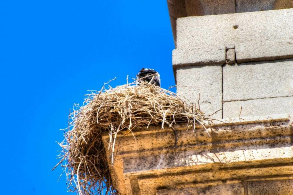 Essential oils can be used as an effective bird deterrent