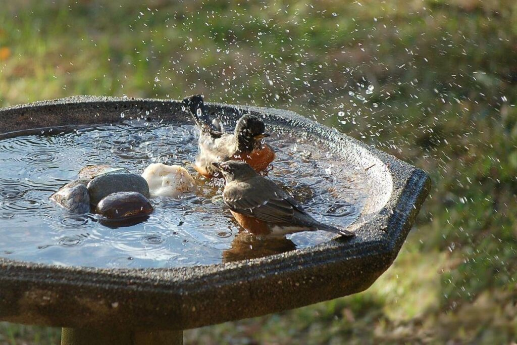 What Do You Do If You've Filled a Bird Bath Too Deep