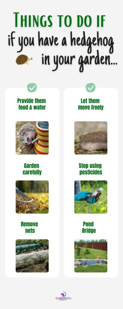 Infographics about things to do if you have a hedgehog in your garden