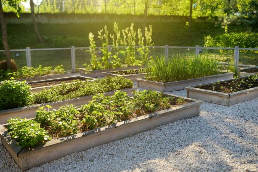 How Much Compost Should I Use in Raised Beds?