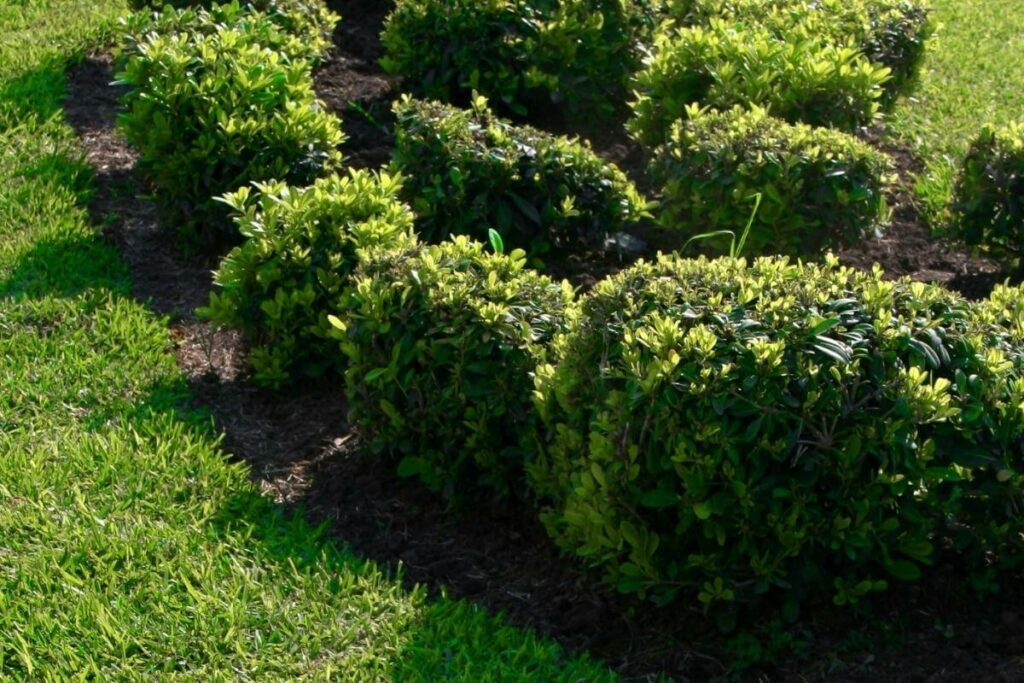 How Much Compost Should I Put Around Shrubs?