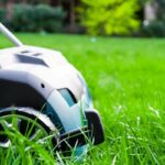 How to Revive a Lawn After Scarifying