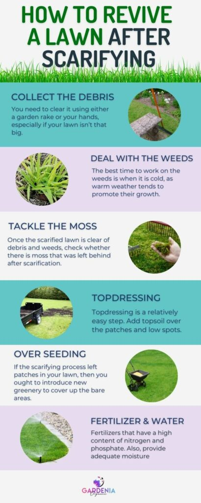 Steps for revive lawn after scarifying