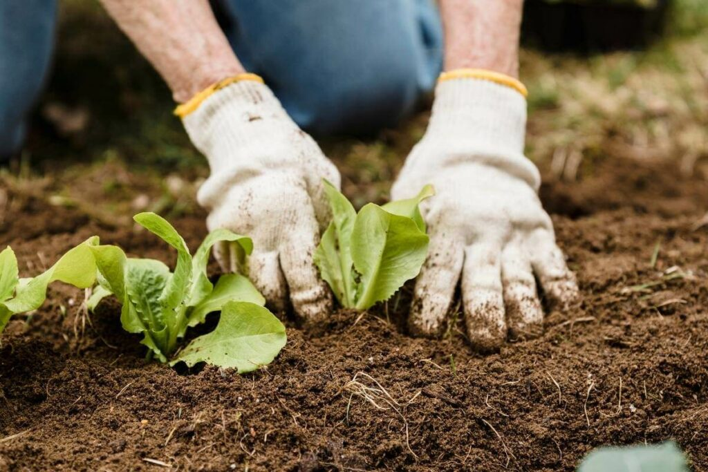 Is Unfinished Compost Ever Bad for Plants?