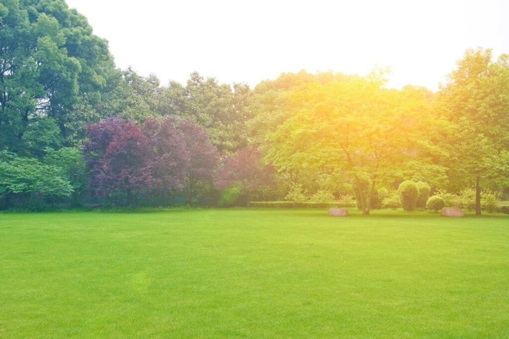 Scarifying Contribute to A Healthy Lawn