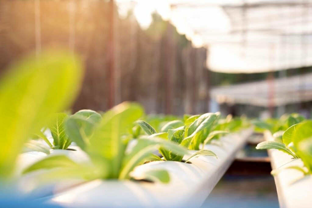 The Significance of Sunlight to Aquaponics