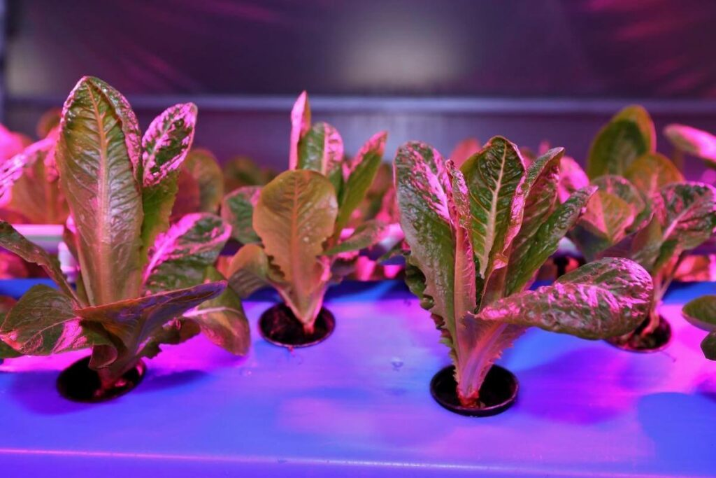 Upfront running costs for artificial lights aquaponics