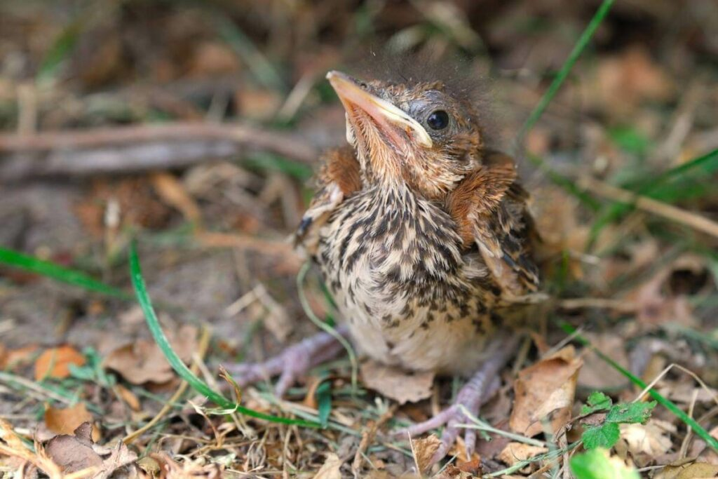 How Do You Get a Baby Bird to Eat?