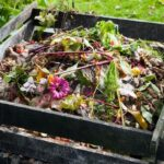 Worm Castings vs Compost: Which is Better?