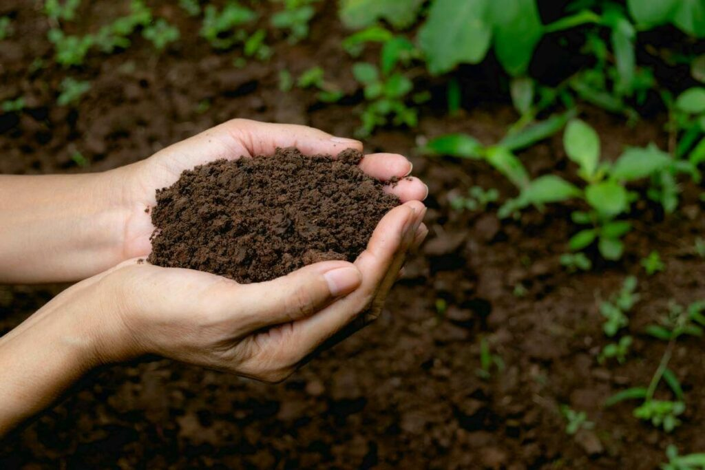 Bokashi vs Vermicomposting: Which is better