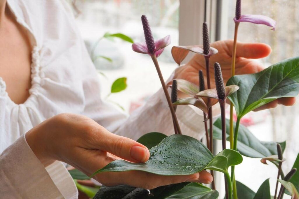 What Can You Do to Avoid Pests near Your Plants?