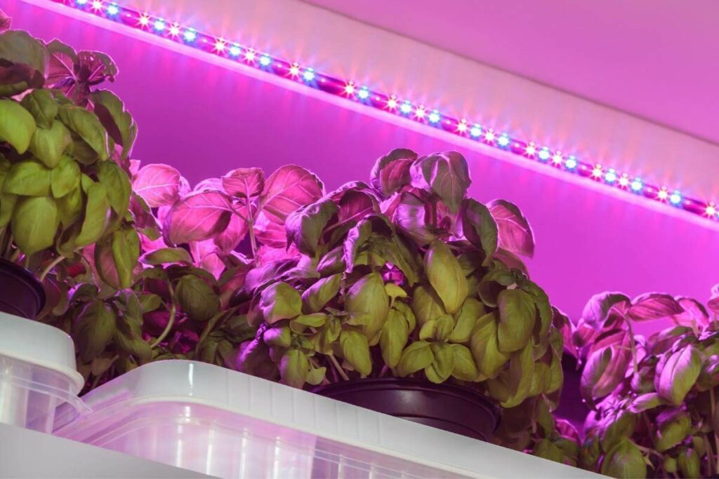 Herbs getting LED lights