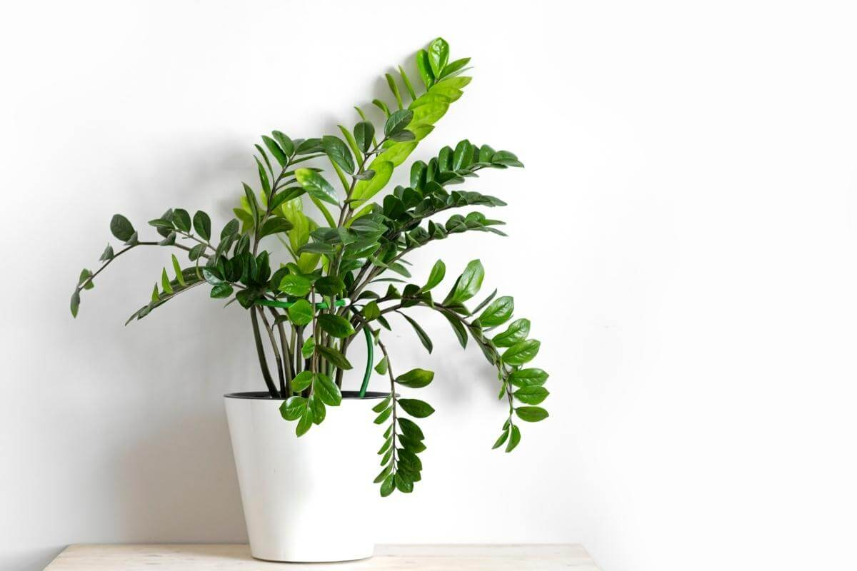 Best Plants for Offices with No Windows