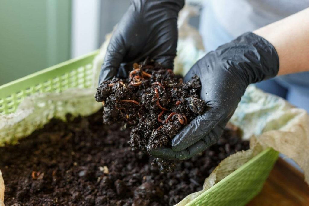 Better growth with Vermicompost is crucial