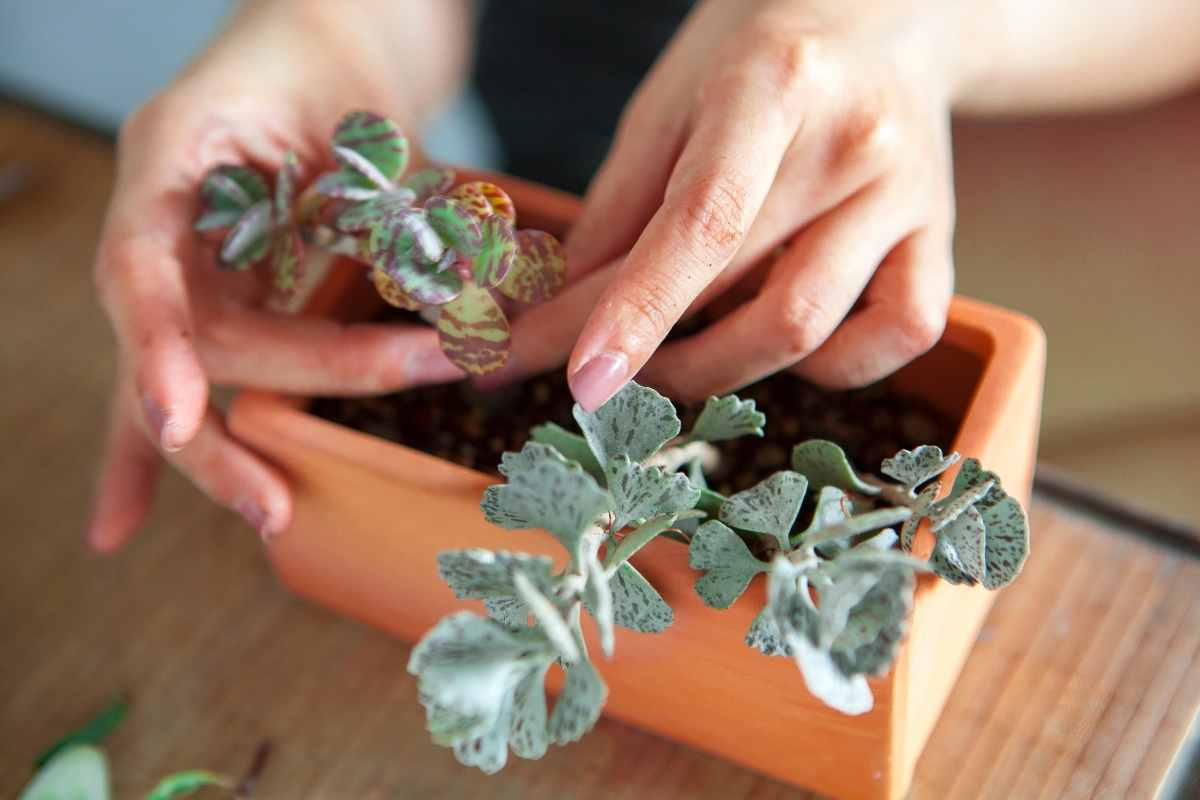 Can Cacti and Succulents Be Planted Together?
