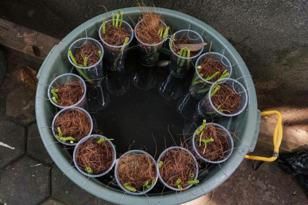 Guide on Calculating hydroponic nutrients