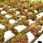 Can You Use Foam as A Hydroponic Growing Medium?