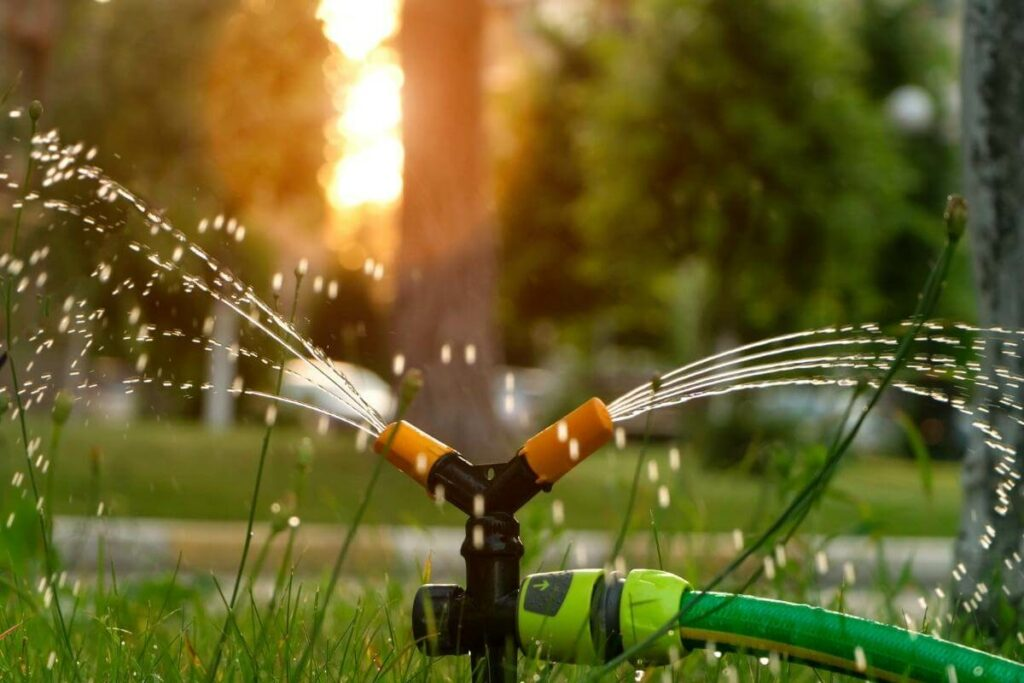 Why Choose Regular Lawn Care and Maintenance?