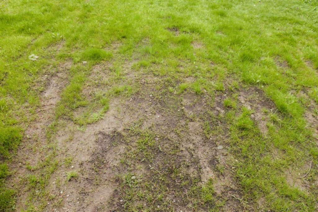 How to Improve Grass on Clay Soil
