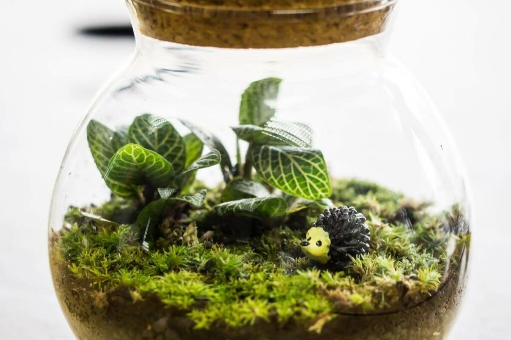 What Affects The Lifespan Of A Closed Terrarium?