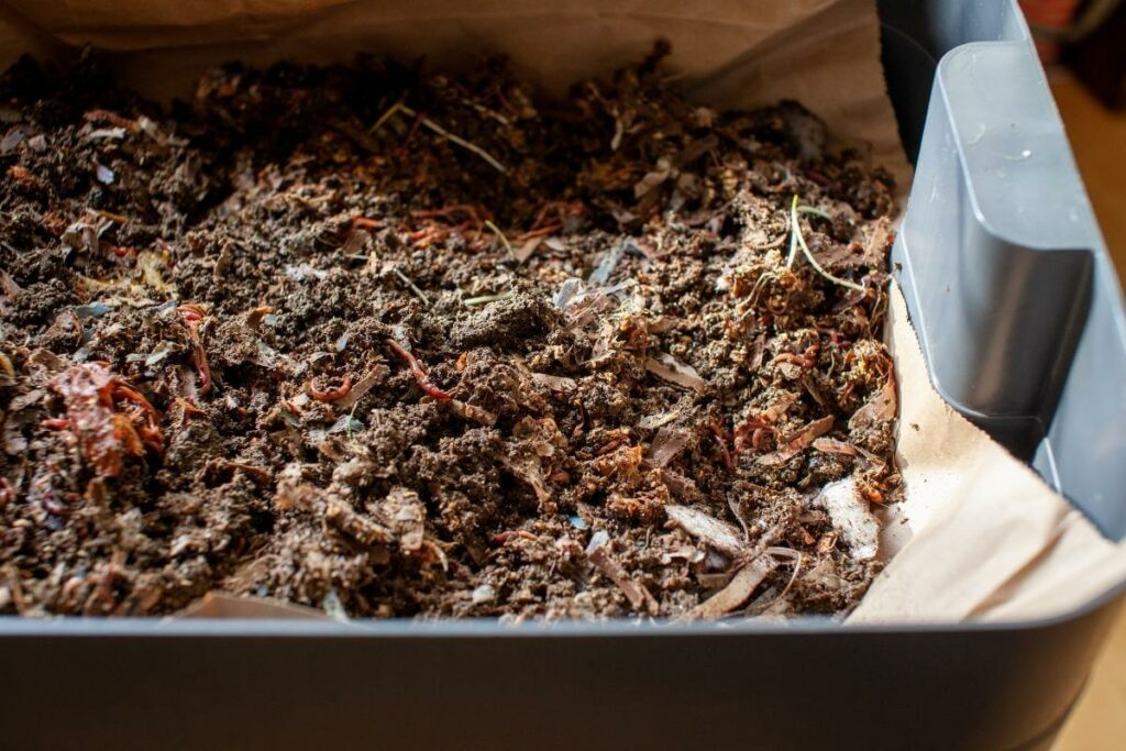 Choosing Compost or vermicompost