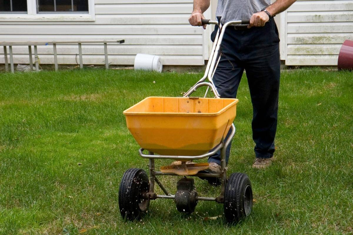 Use Compost for Overseeding