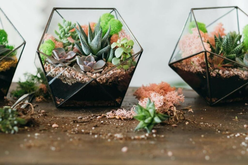 Why You Why You Shouldn't grow succulents in moss