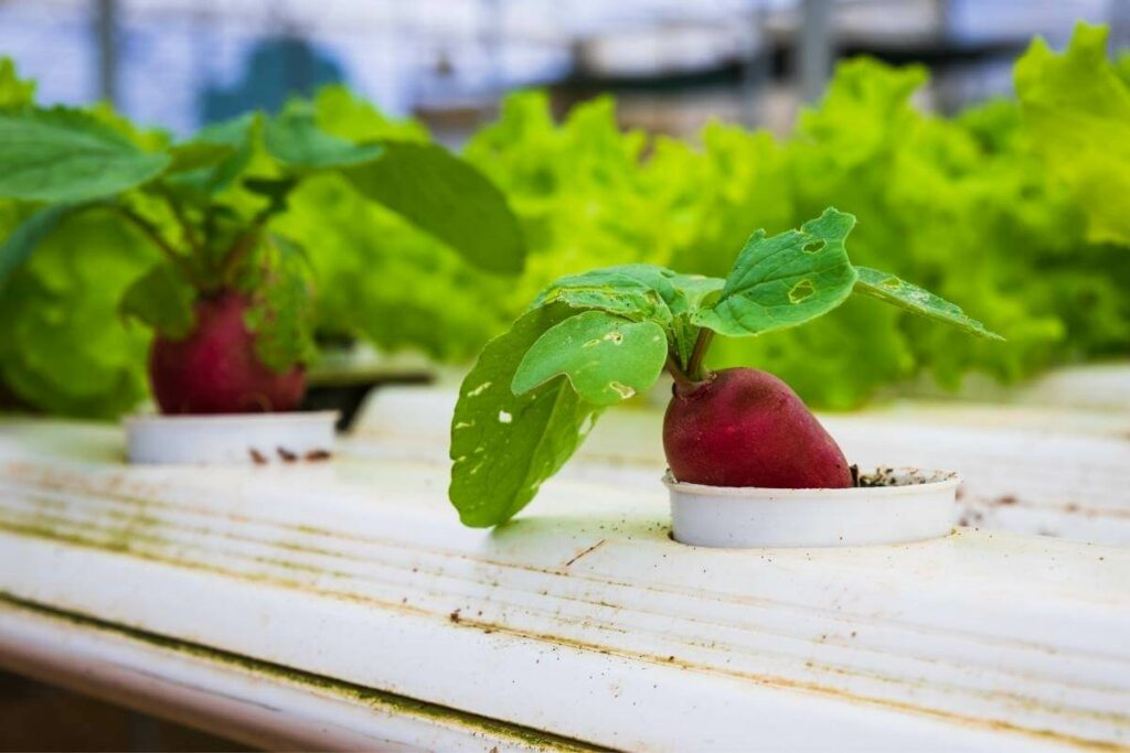 Effective hydroponic systems you can test