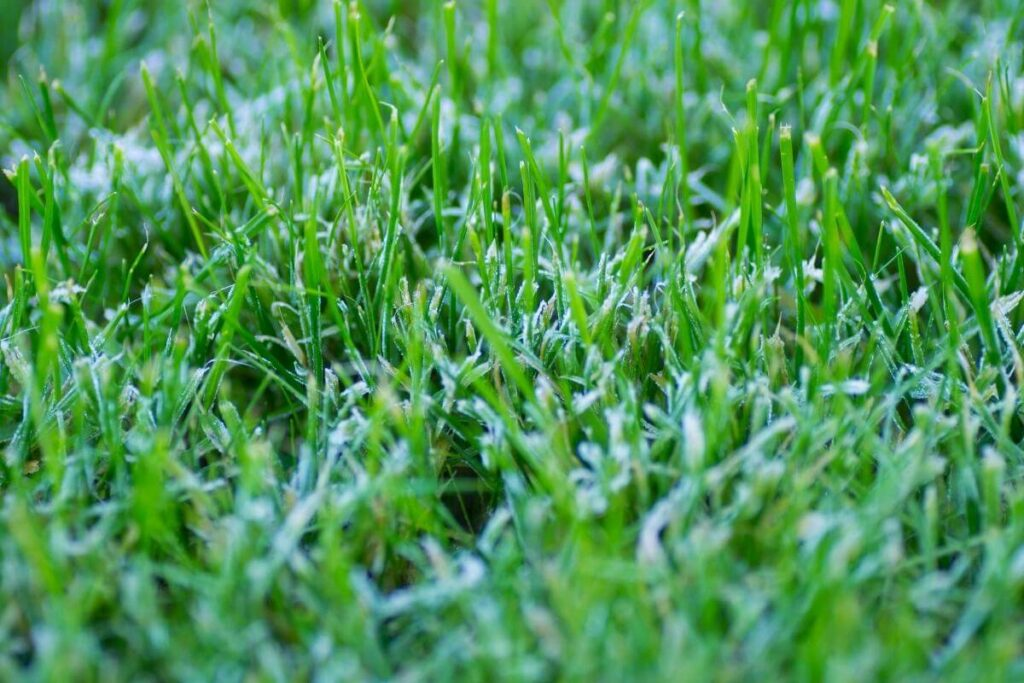 Grass types winter mowing guide and tips