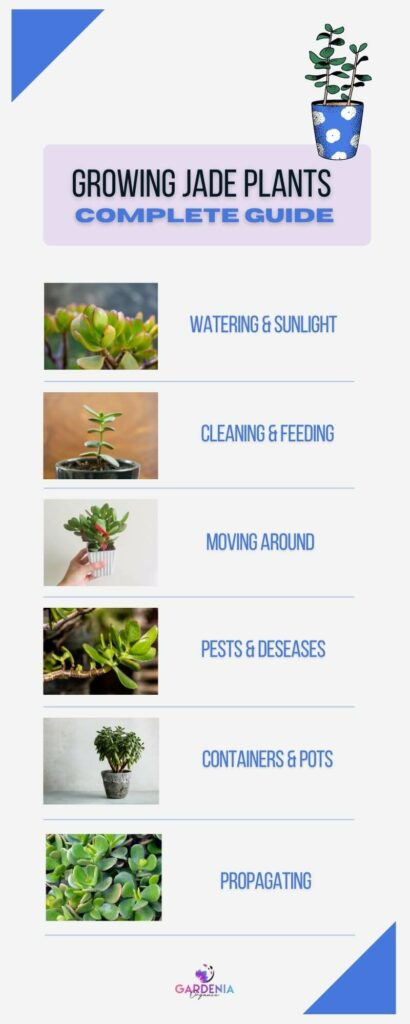 Growing jade plant complete guide