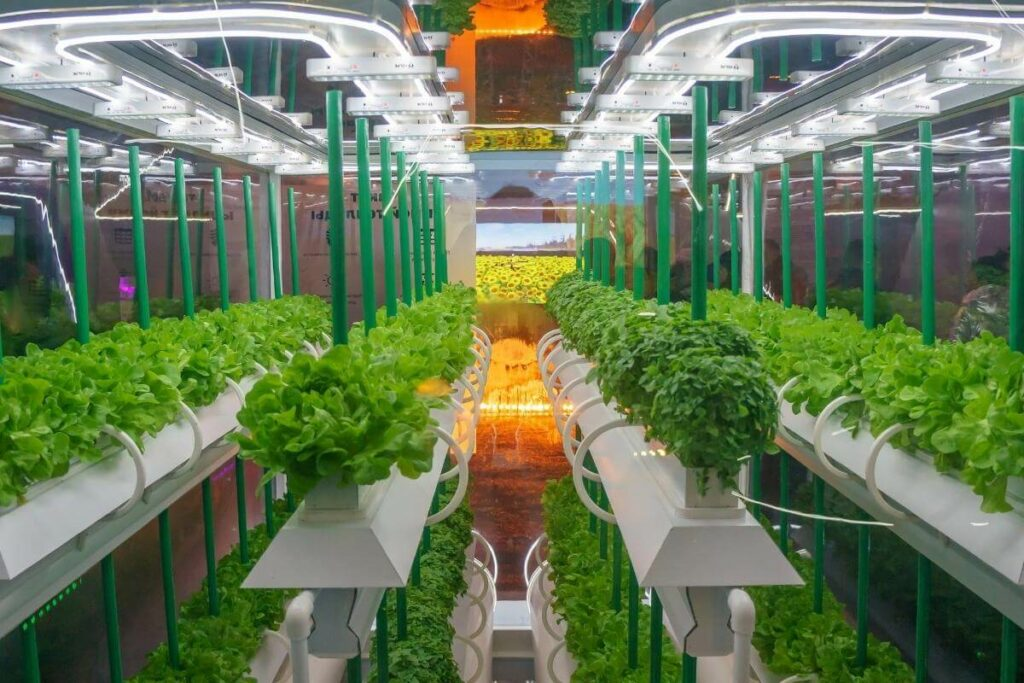 Growing Hydroponic Vegetables for Profits