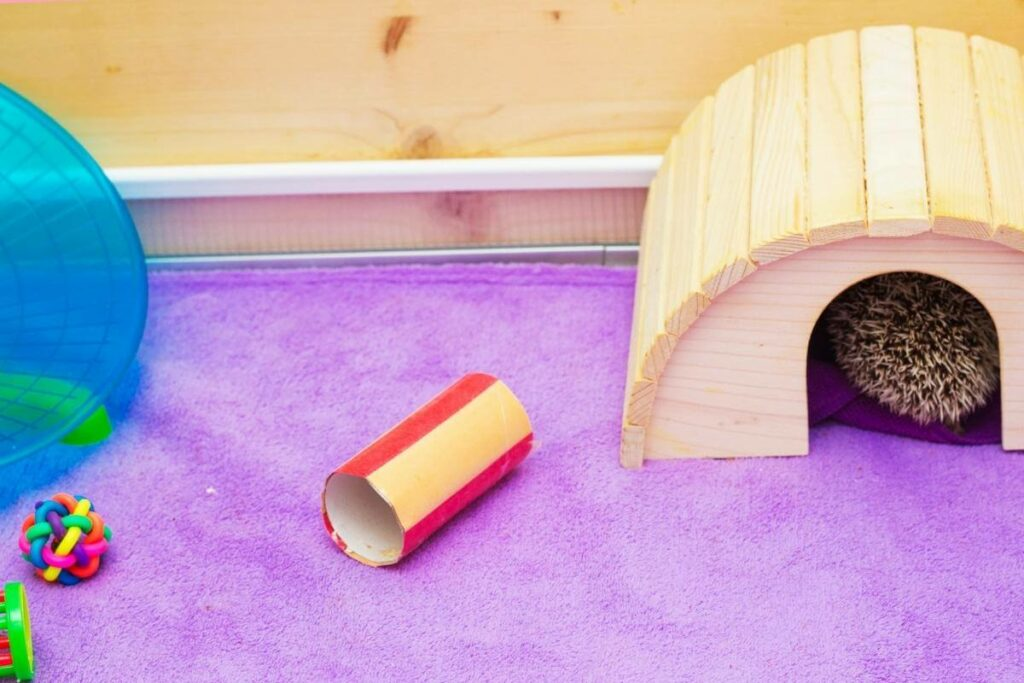 How to clean hedgehog cage