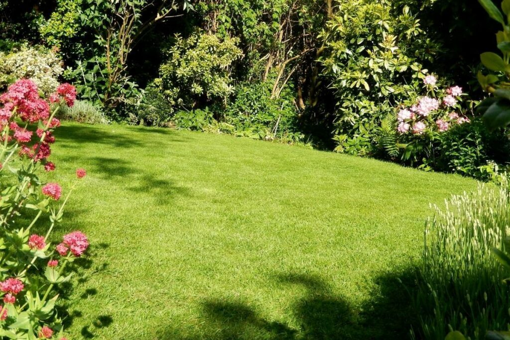 Lawn with compact soil