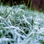 How Often to Mow Lawn in Winter