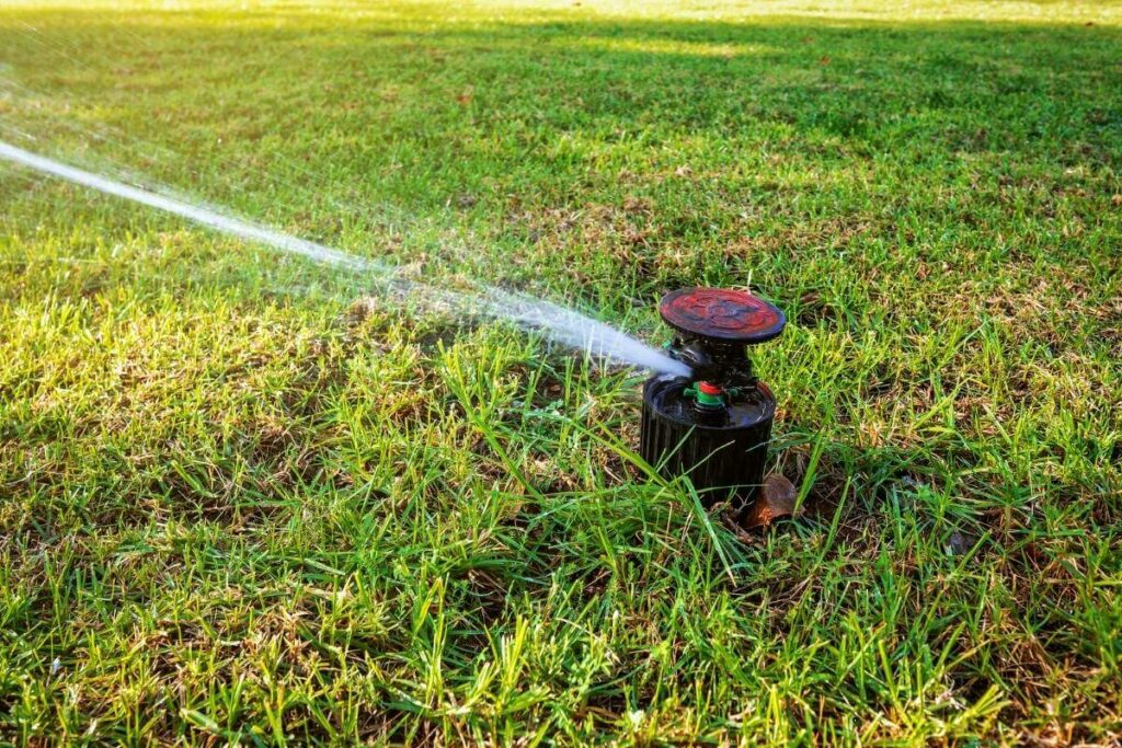 How Often Should You Water Grass Seeds?
