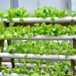 How Much Does It Cost to Set up a Hydroponic at Home?