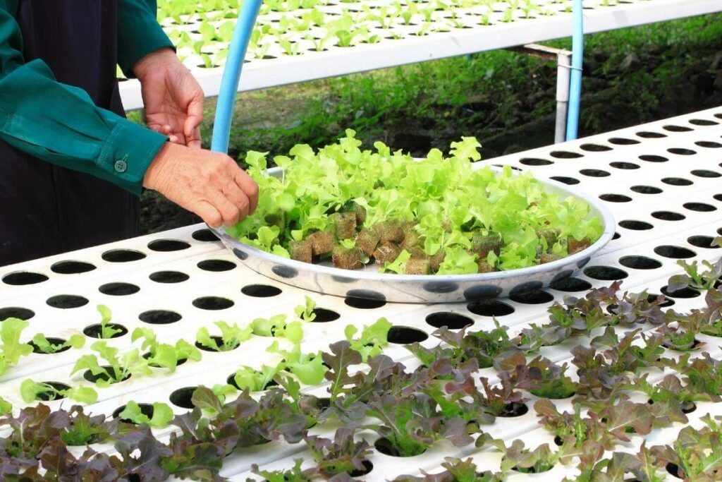 Fastest-growing Hydroponic Plants