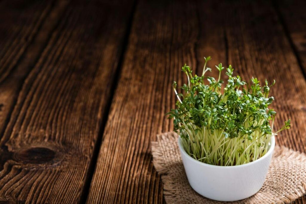 Indoor Cress Growing Conditions and Basic Care