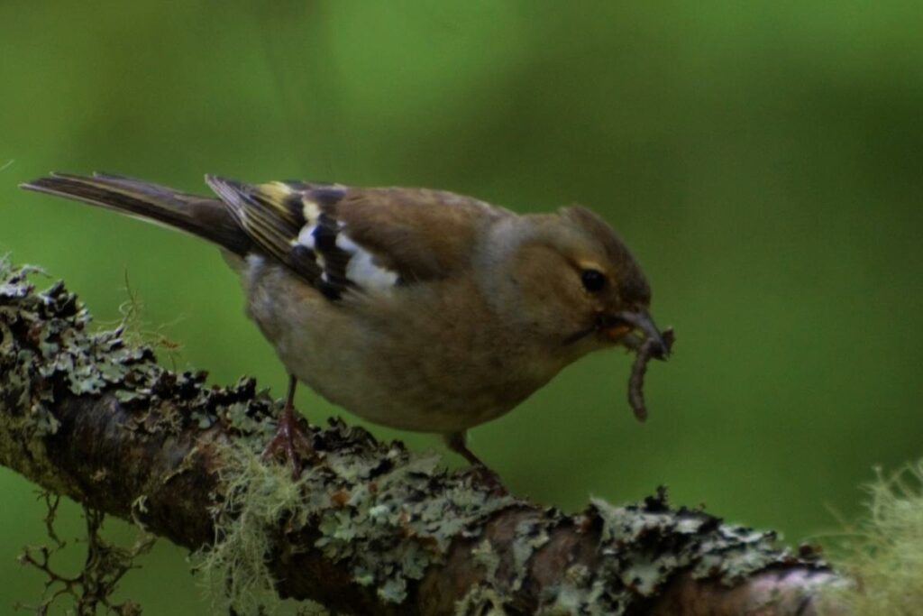Bird eat insects outside