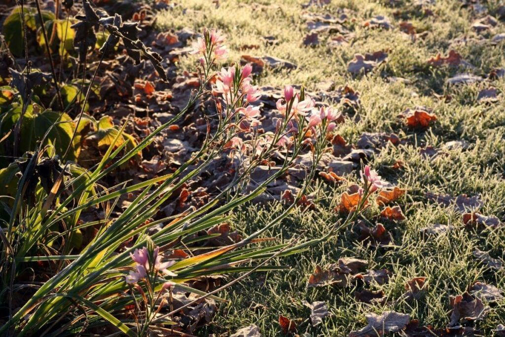 What you should do with your lawn in winter