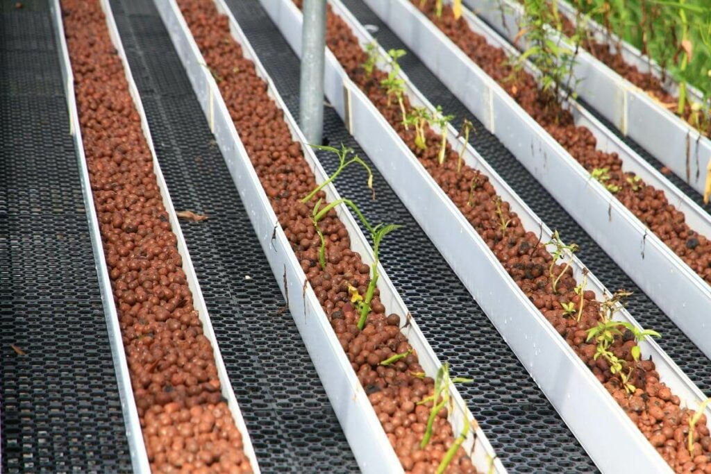 Signs of Magnesium Deficiency in Aquaponics