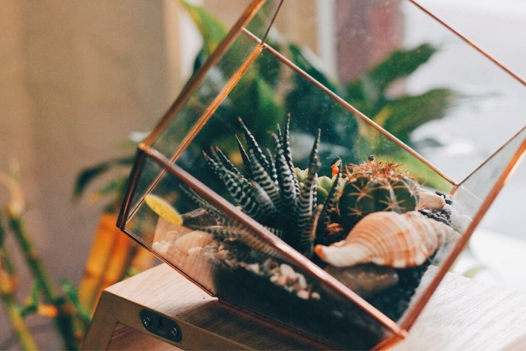 Open and Closed Terrarium Substrate