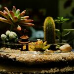 Terrarium Substrate Layers Complete Guide