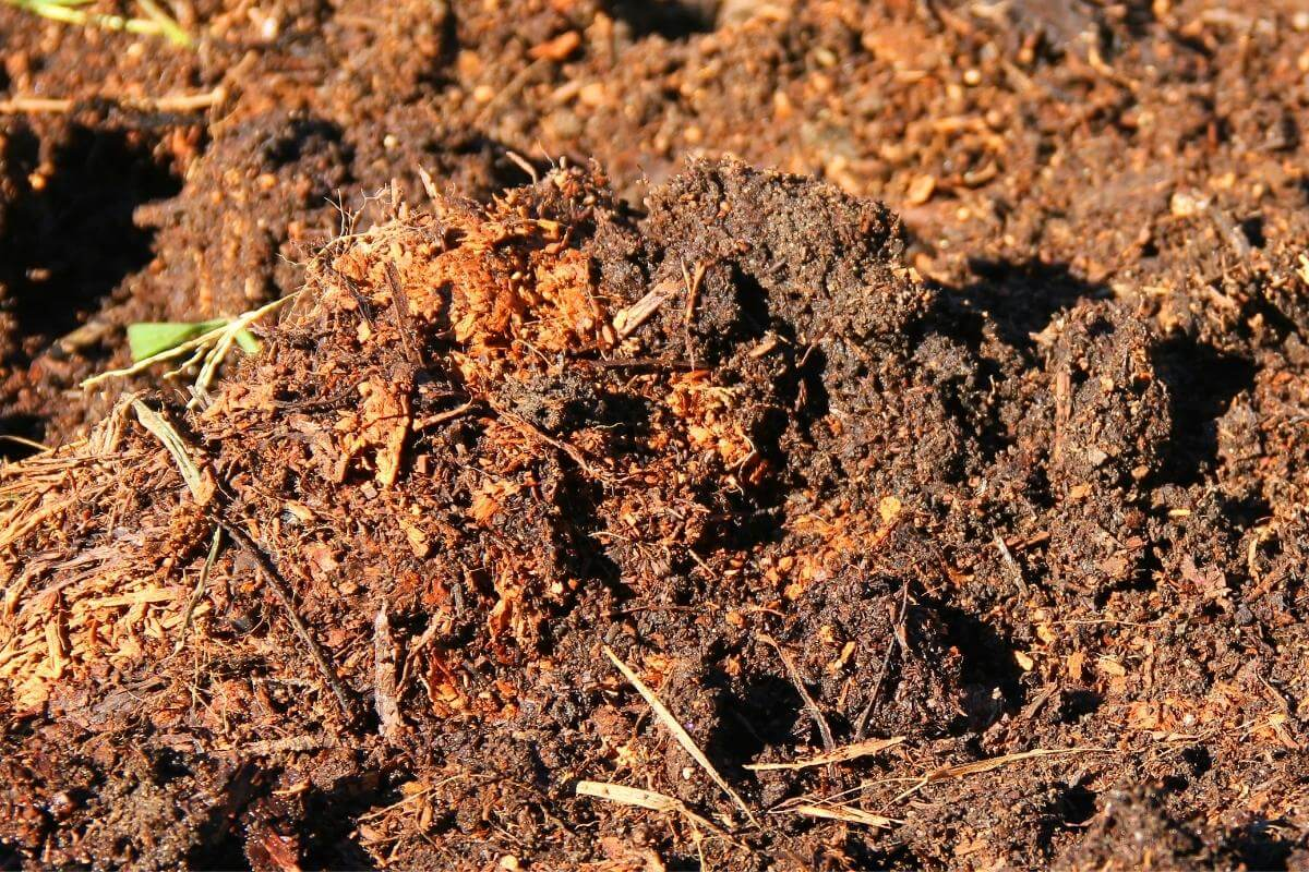 Tips on testing compost quality