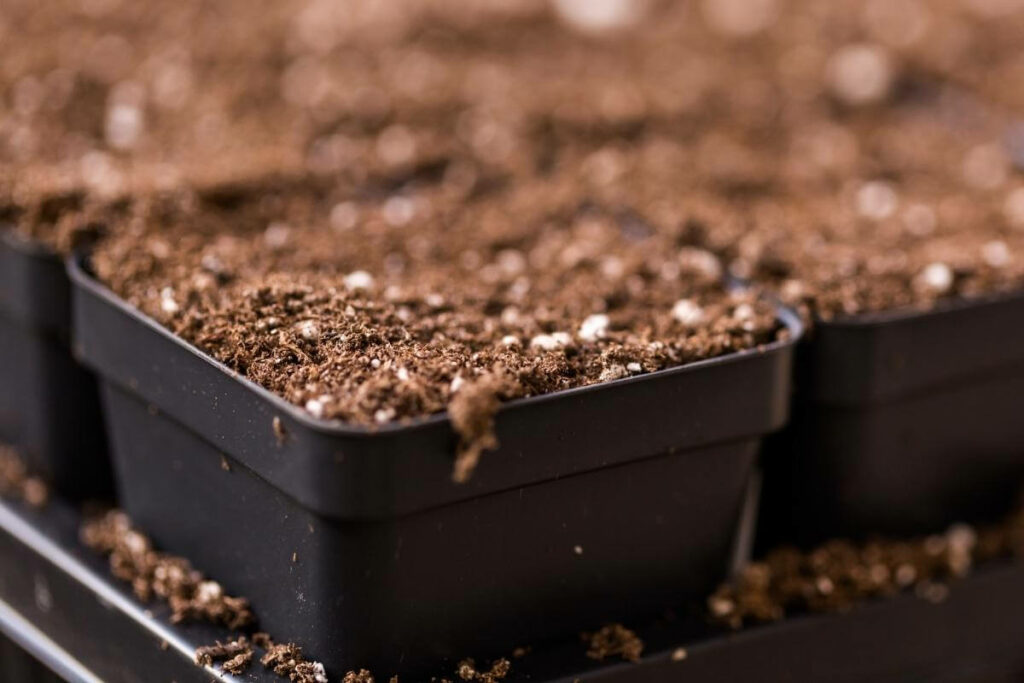 Where to find good topsoil