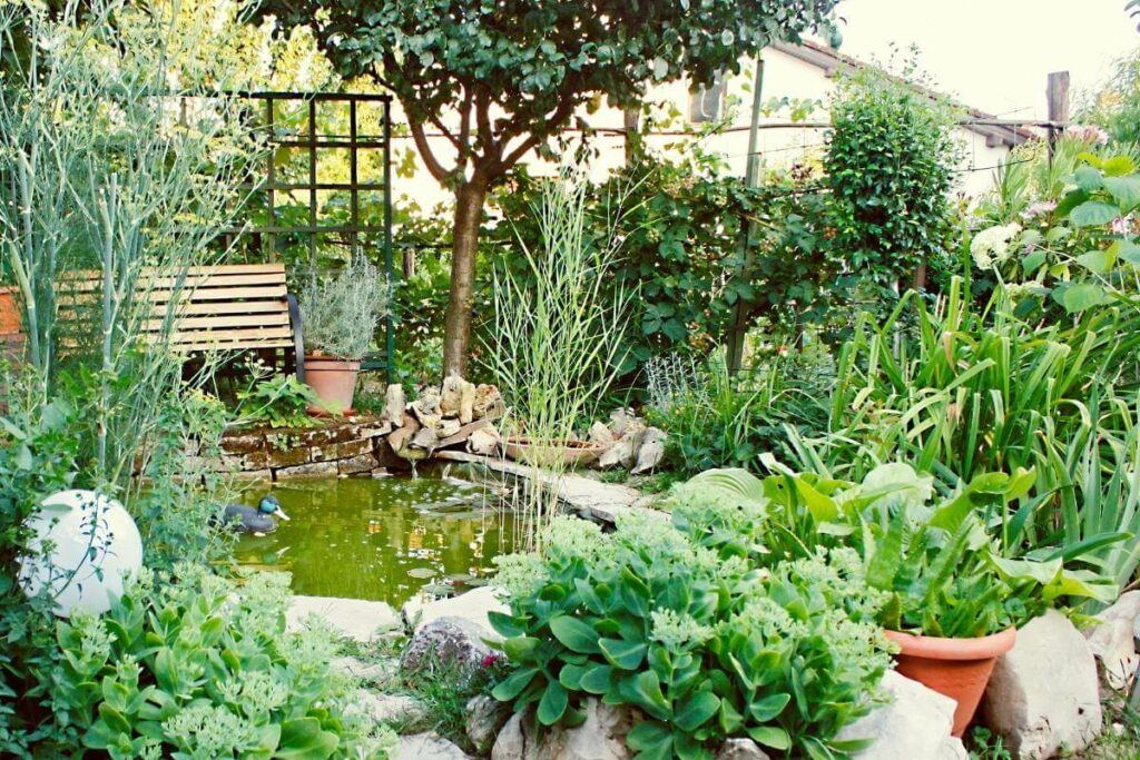 Decorate the edge of your pond with trees