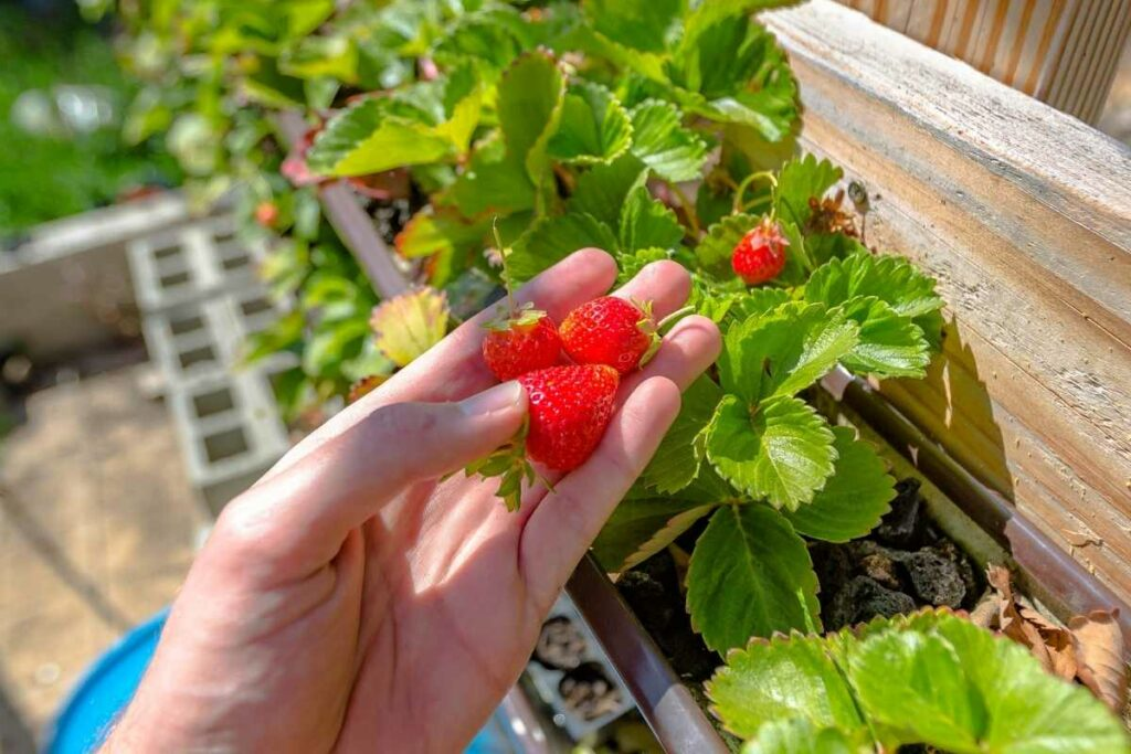 How Long Do You Need to Wait Before Planting in Aquaponics?